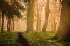 Forest trail in the morning. Forest paths on a summer morning Stock Photos