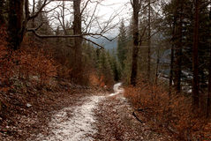 Forest trail mountains winter Royalty Free Stock Images
