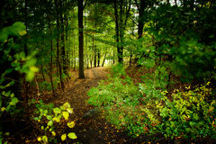 Forest trail. A narrow trail in a foliaged  forest Royalty Free Stock Photos