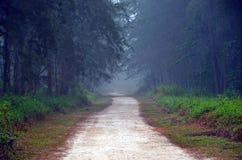 Forest Trail nevoento fotografia de stock royalty free