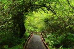 Forest Trail noroeste pacífico fotos de stock