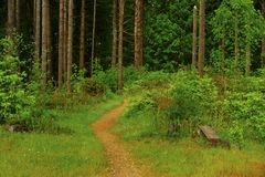 Forest Trail noroeste pacífico fotografia de stock