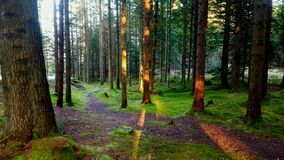 Forest trail. Old Forest trail with green Forest bed, Vannbassengan Royalty Free Stock Photos