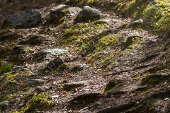 Forest trail over rocks, stones and green grass in early spring Stock Photos