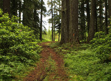Forest Trail Royalty Free Stock Image