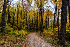 Forest trail in Pictured Rocks National Lakeshore, Munising, MI. Forest hiking trail in Pictured Rocks National Lakeshore, Munising, MI, USA. Autumn forest with royalty free stock images