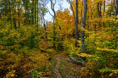 Forest trail in Pictured Rocks National Lakeshore, Munising, MI. Forest hiking trail in Pictured Rocks National Lakeshore, Munising, MI, USA. Autumn forest with stock image