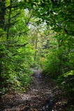 Forest trail, Primorye, Russia Royalty Free Stock Photos