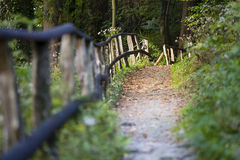 Forest Trail And Railing, Eifel Stock Images