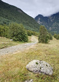 Forest Trail with a Rock. Path through a forest in a high mountain area Stock Photo