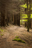 Forest trail. Romantic forest trail. slovakia forests route Royalty Free Stock Photography