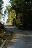 Forest trail. Romantic forest trail. slovakia forests route Royalty Free Stock Photo