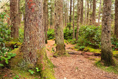 Forest trail. Shredded wood covered path leading into a forest Royalty Free Stock Photography