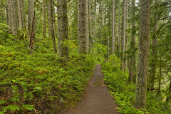 Forest trail in Silver Falls State Park Stock Photo