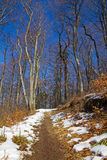 Forest trail. With snow remainders Stock Photos