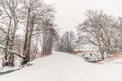 Forest trail with snow in the winter Stock Photo