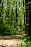 Forest Trail in Spring. Trail curves thru a spring woodland Royalty Free Stock Image