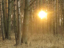 Forest Trail Sun Stock Photography