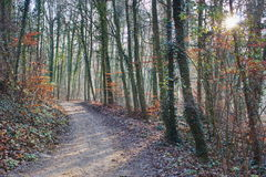 Forest trail in the sun Royalty Free Stock Photography