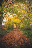 Forest trail surrounded by colorful trees. In the fall with golden leaves covering the path in an fairytale environment Stock Images