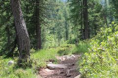 Forest trail surrounded by trees stock photos