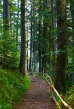 Forest trail among the tall trees in the morning. Lovely nature scenery. good place for running and walking Royalty Free Stock Images