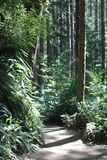 Forest Trail. A trail winds through a sunlit forest royalty free stock image