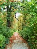 Forest Trail in Tsjechische Republiek Royalty-vrije Stock Afbeeldingen