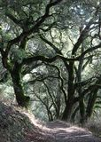 Forest Trail Under Oaks royaltyfria bilder