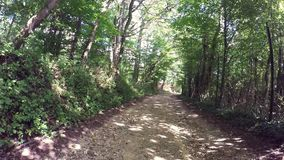 Forest trail, walk in late summer stock video