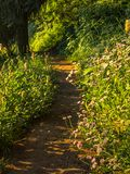 Forest trail with wildflowers Royalty Free Stock Images