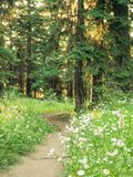Forest trail with wildflowers Stock Photography