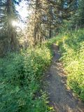 Forest trail with wildflowers Royalty Free Stock Photos