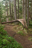 Forest trail with wind downed tree Royalty Free Stock Photography
