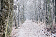 Forest trail at winter Royalty Free Stock Image