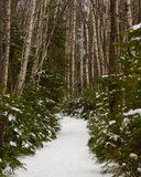 Forest trail in winter Stock Photo