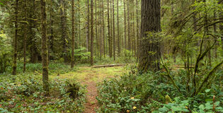 Forest Trail Wooded Area Oxbow Regional Park Oregon Royalty Free Stock Photo
