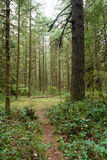 Forest Trail Wooded Area Oxbow Regional Park Oregon Royalty Free Stock Photos