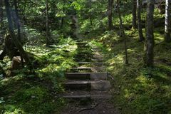 Forest trail with wooden steps stock photography