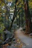 Forest trail Yosemite Royalty Free Stock Photo
