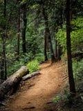 Forest Trail in Yosemite. Worn red trail in the dense green Nelder Grove, located in California Stock Photo