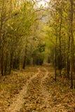 Forest Trails Fotografia Stock Libera da Diritti