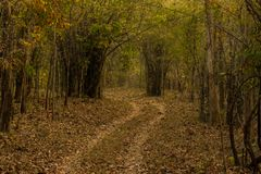 Forest Trails Arkivfoton