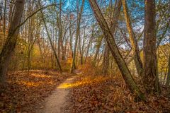 Forest trails in autumn on a sunny day royalty free stock image