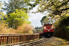 Forest train Stock Photos