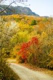 Forest travel mountain autumn Royalty Free Stock Photos