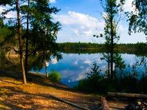 Forest湖Travkino 免版税库存照片