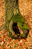 Forest Tree Photographie stock
