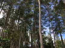 Forest Tree Stockfotos