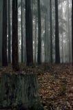 Forest Tree-aanplanting Stock Afbeeldingen
